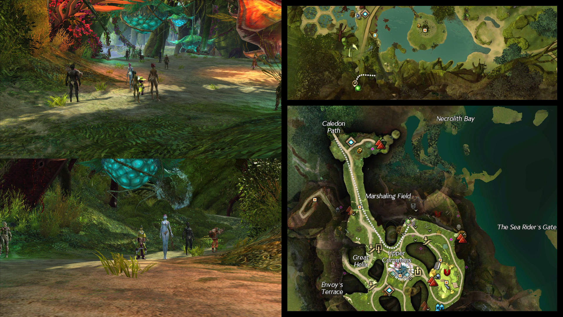 How to switch between the starter areas in Guild Wars 2 ... Caledon Forest Map on blue mountains forest map, gendarran fields map, caledonian forest map, lornar's pass map, rata sum map, sparkfly fen map, ad d city map, iron marches map, ruins of orr map, timberline falls map, kessex hills map, winter wonderland map, brisban wildlands map, guild wars map, fireheart rise map, canada forest map, malchor's leap map, ontario forest map, straits of devastation map,