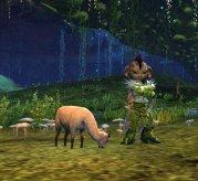 Guild Wars 2 Mini Llama