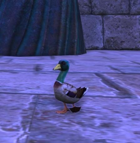 Rift Dancing Ducklar